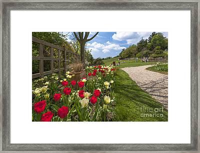 Spring Garden Framed Print by Donald Davis