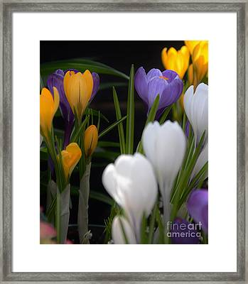 Spring Glow Framed Print by Kathleen Struckle