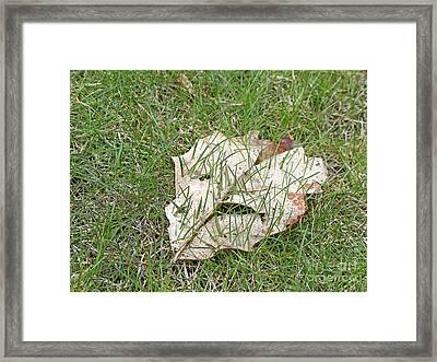 Spring Grass Growing Framed Print by Ann Horn