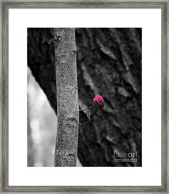 Spring Growth Framed Print by Steven Ralser