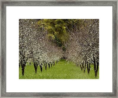 Spring Has Sprung Framed Print by Bill Gallagher