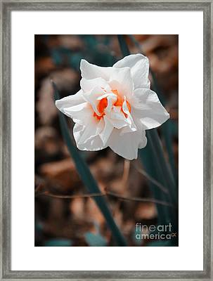 Spring Has Sprung Framed Print by Gerlinde Keating - Keating Associates Inc