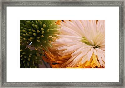 Spring Has Sprung II Framed Print by Anna Villarreal Garbis
