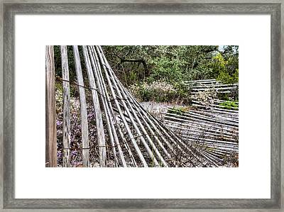 Spring In The Florida Panhandle Framed Print by JC Findley