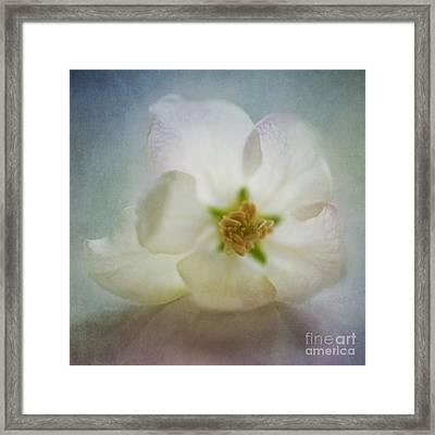 Spring Is Awake Framed Print by Priska Wettstein