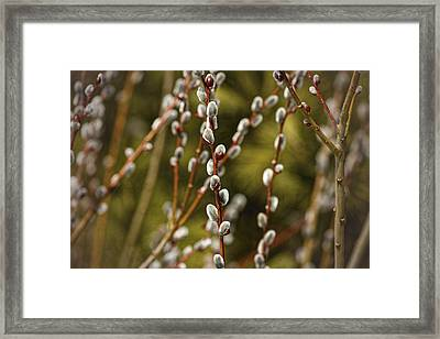 Spring Is Springing Framed Print by Thomas Young
