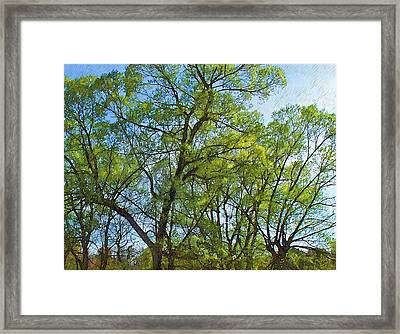 Spring Leaves In The Willows Framed Print by Joy Nichols