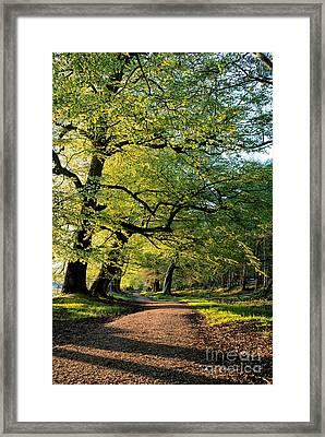 Spring Light  Framed Print by Tim Gainey