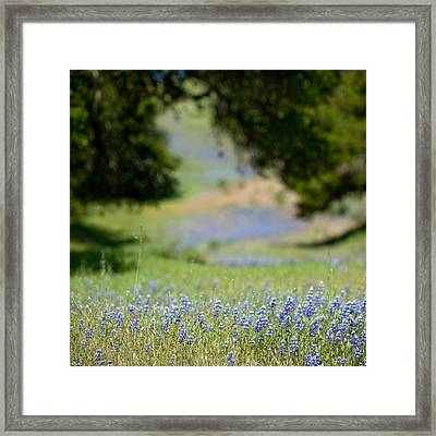 Spring Lupines Framed Print by Art Block Collections