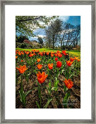 Spring Meadow Framed Print by Adrian Evans