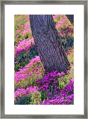 Spring Meadow Framed Print by Mariola Bitner