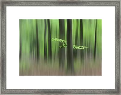 Spring Morning Framed Print by Huib Limberg