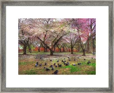 Spring On Boston Common Framed Print by Joann Vitali