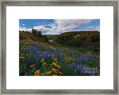 Spring On The Yakima Framed Print by Mike  Dawson