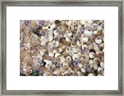 Spring Onions At The Market Framed Print by Michelle Calkins