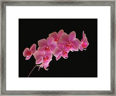Spring Orchids Framed Print by Juergen Roth