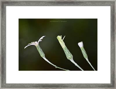 Spring Phase Framed Print by Sonali Gangane
