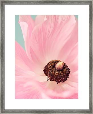 Spring Pink Framed Print by Amy Weiss