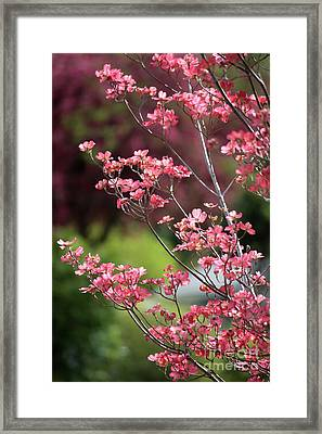 Spring Pink And Green Framed Print by Carol Groenen