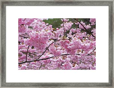 Spring Pink Tree Blossom Flowers Prints Framed Print by Baslee Troutman