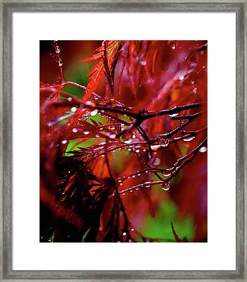 Spring Rain Framed Print by Rona Black