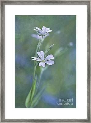 Spring Romance Framed Print by Maria Ismanah Schulze-Vorberg