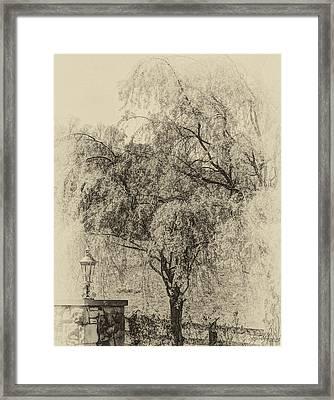 Spring Framed Print by Skip Tribby