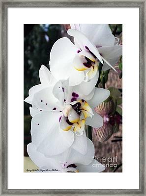 Spring Splash Orchid Framed Print by Megan Dirsa-DuBois