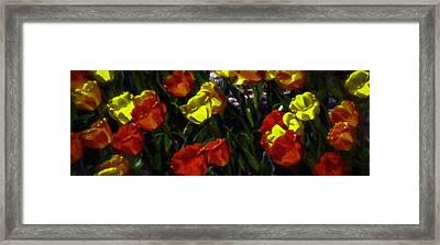 Spring Sunshine Framed Print by F Leblanc