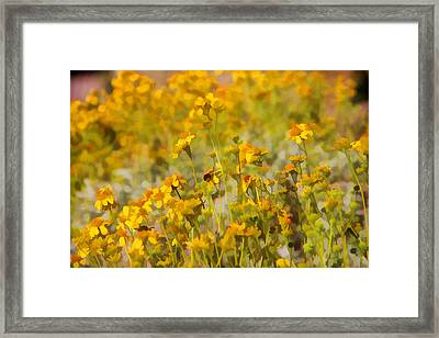 Spring Framed Print by Tammy Espino