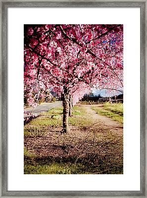 Spring Time Framed Print by Aron Kearney