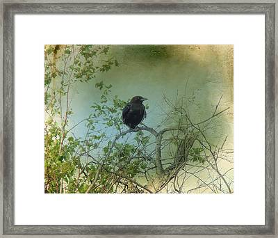 Spring Tree And Crow Framed Print by Gothicrow Images