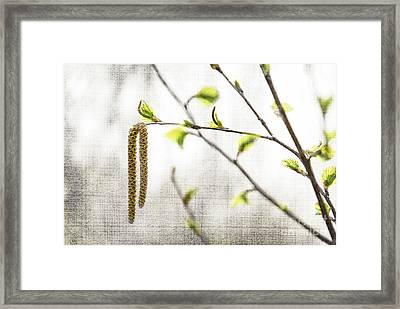 Spring Tree Branch Framed Print by Elena Elisseeva