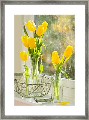 Spring Tulips Framed Print by Amanda And Christopher Elwell