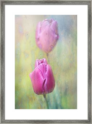 Spring Tulips Framed Print by Jenny Rainbow