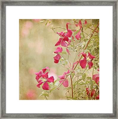 Spring Whisper Framed Print by Kim Hojnacki
