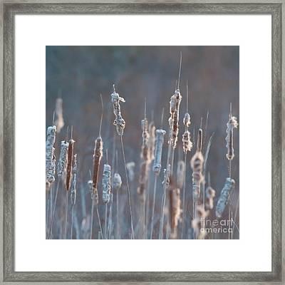 Spring Whisper... Framed Print by Nina Stavlund