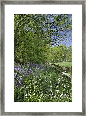 Spring Wildflowers Framed Print by Michele Steffey