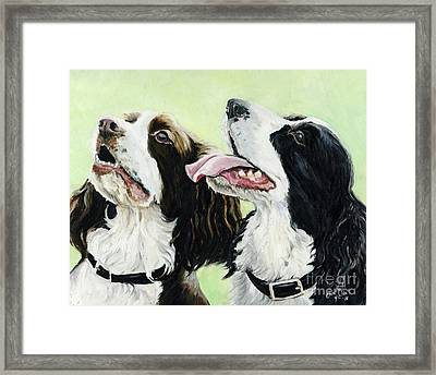 Springer Beggers Framed Print by Charlotte Yealey