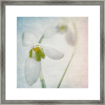 Springflower Framed Print by Annie Snel