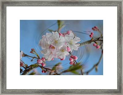 Springing Blossoms Framed Print by Sonali Gangane