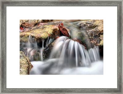 Springing Forward Framed Print by JC Findley