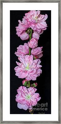 Spring's Arrival  Framed Print by Heidi Smith