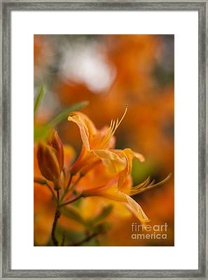 Springs Glory Framed Print by Mike Reid