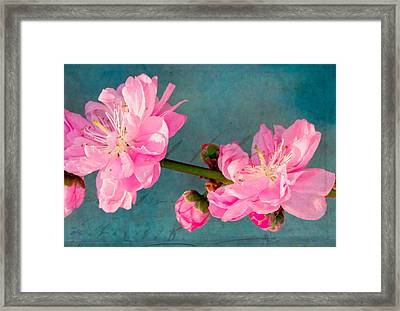 Spring's Promise  Framed Print by Heidi Smith