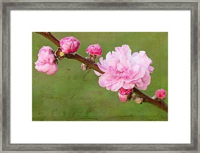 Spring's Reveal  Framed Print by Heidi Smith
