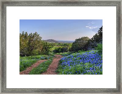 Springtime In The Hill Country Framed Print by Cathy Alba