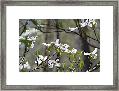 Springtime Framed Print by Mark Barcikowski