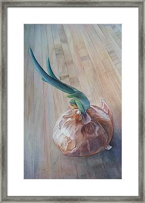Sprouting Onion Framed Print by Sandy  Haight