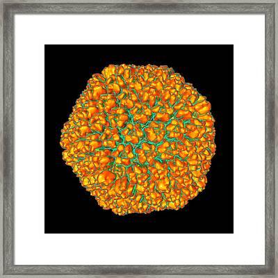 Sputnik Virophage Framed Print by Mehau Kulyk